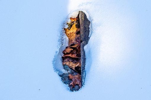 Leaves, Footstep, Snow, Winter, Ski, Cold, Ice, White