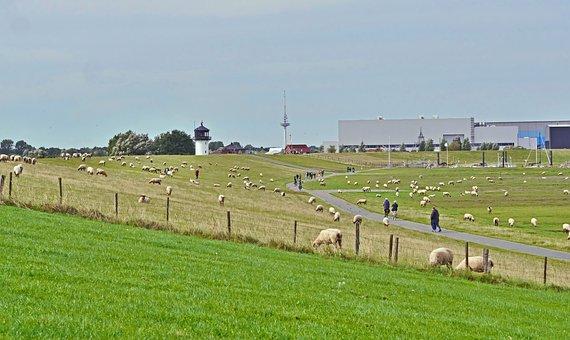 Pasture, Sheep, Flock, Animals, Grazing, Mammals