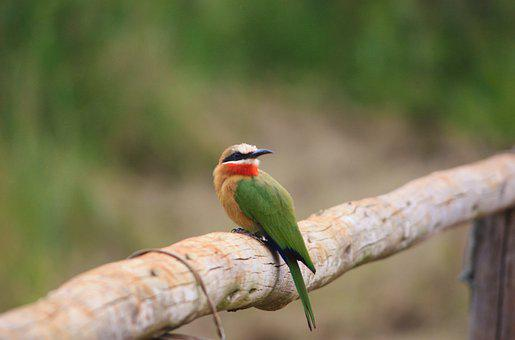 Bird, Feathers, Plumage, Beak, Fence, Green, Wildlife