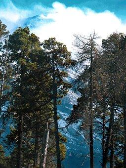 Mountain, Clouds, Cold, Forest, Pinus, Hartwegii, Ocote