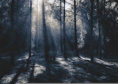 Forest, Dark, Rays, Trees, Nature, Mystical, Fog