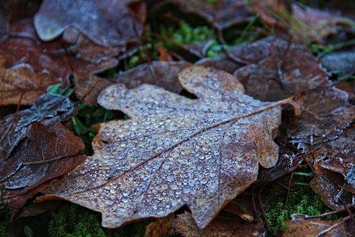 Freezing Sheet, Natur, Forest