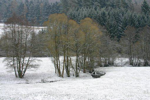 Snow, Fields, Trees, Conifers, Conifer Forest, Needle