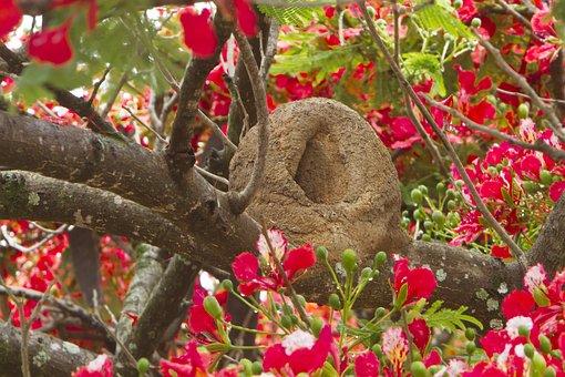 Rufous, Hornero, Bird, Wildlife, Nature, Spring