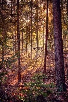 Tree, Leaf, Autumn, Nature, Plant, Foliage, Green