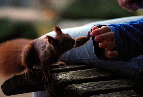 Squirrel, Hand, Paw, Contact, Encounter, Curious, Cute