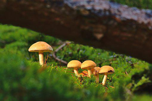 Mushrooms, Moss, Forest, Small Mushrooms