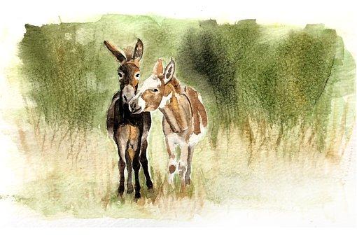 Donkeys, Mule, Animals, Farm, Wild, Wildlife, Farming