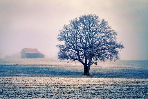 Tree, House, Hut, Barn, Hoarfrost, Wintry, Landscape