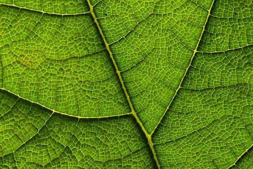 Leaf, Veins, Green, Pattern, Background, Foliage, Plant