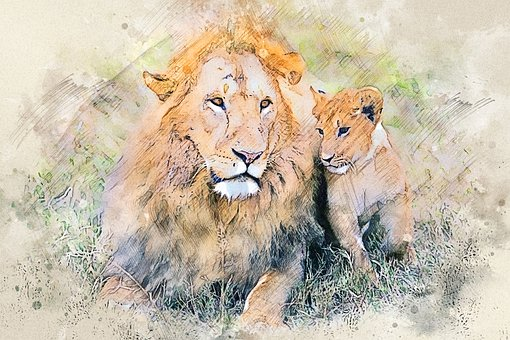 Lion, Cub, Feline, Predator, Carnivore, Wildlife, Cat