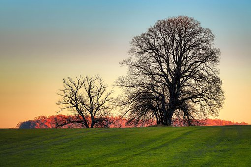 Tree, Meadow, Hill, Forest, Autumn, Nature, Afterglow