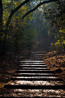 Stairs, Forest, Sunlight, Steps, Stairway, Trees