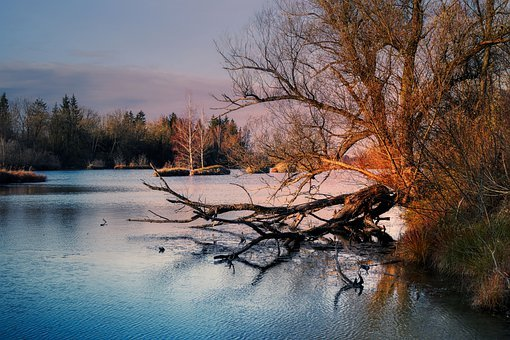 Lake, Bank, Sunset, Forest, Trees, Twilight, Branches
