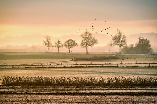 Pasture, Fog, Birds, Grass, Field, Meadow, Fence