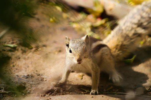 Animal, Squirrel, Rodent, Nature, Wildlife, Cute, Wild