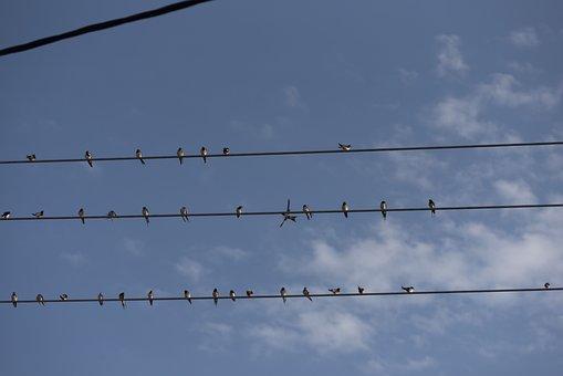 Swallows, Birds, Bluebirds, Silhouette, Songbirds