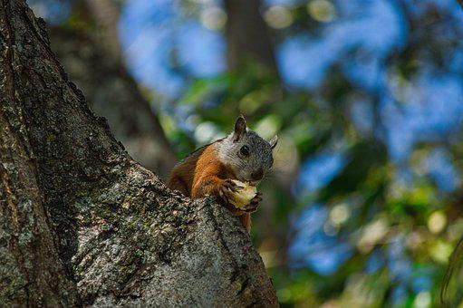 Squirrel, Rodent, Chipmunk, Snack, Nuts, Tree, Trunk