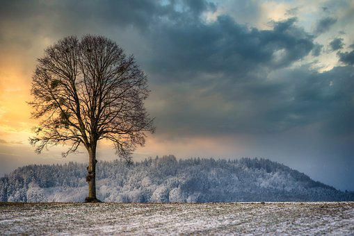 Trees, Forest, Snow, Ice, Frost, Wintry, Winter, Sunset