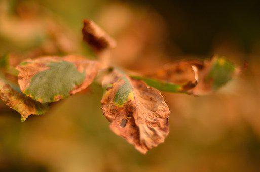 Forest, Tree, Leaf, Autumn, Nature, Leaves, Fall, Green