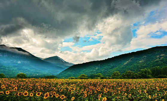 Sunflowers, Flowers, Meadow, Field, Mountains, Clouds