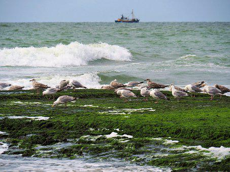 Nature, Seabirds, Seagull, North Sea, Vegetation, Green