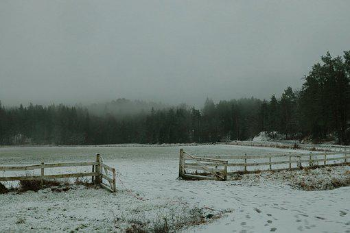 Fence, Trees, Snow, Winter, Landscape, Nature