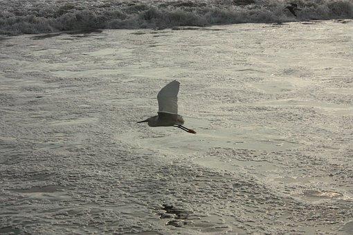 Bird In Flight, Seagull On The Sea, Sunset On Beach