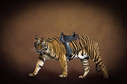 Tiger, Saddle, Horse, Drive, Digital Background