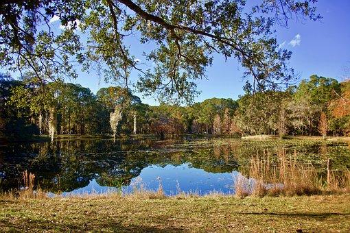 Lake, Trees, Landscape, Nature, Water, Reflection, Tree