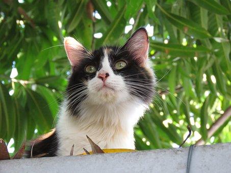Cat, Kitten, Cute, Animal, Feline, Sweet, Young