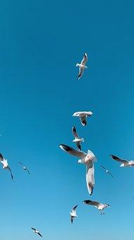 Seagull, China, Kunming