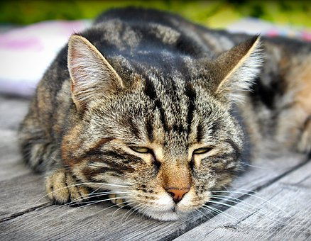 Cat, Relaxation, Relax, Domestic Cat, Cute, Pet, Animal