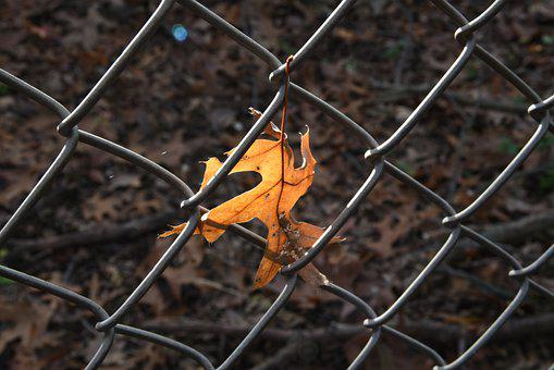 Fall, Leaf, Pattern, Macro Photography