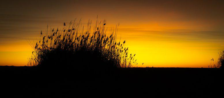 Grass, Gold, Sunset, Nature, Yellow, Plant, Silence
