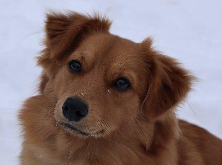 Dog, Puppy, Pet, Animal, Canine, Domestic, Portrait