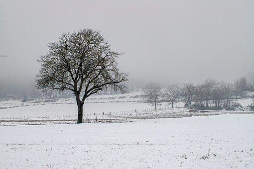 Winter, Snow, Tree, Fog, Savoie, Gresy Sur Isère, Field