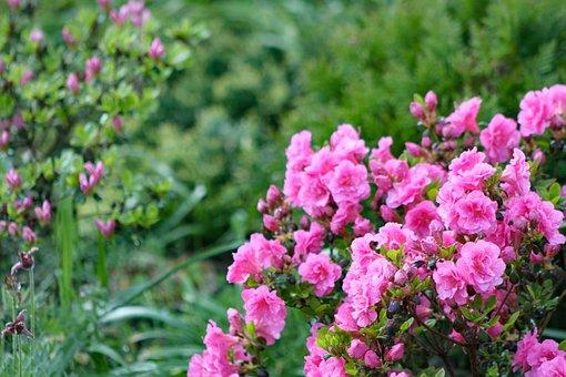 Nature, Flower, Garden, Summer, Spring, Flowers, Plant