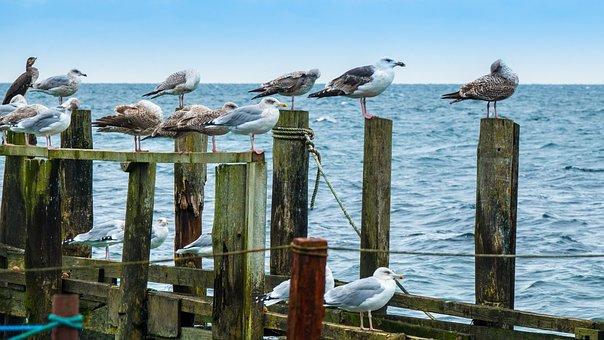 Sea, Sky, Jetty, Wood, Seagulls, Bird, Water, Nature