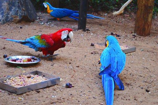 Birds, Parrots, Plumage, Arara, Colorful, Animal