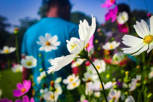 Flower, Rose, Bloom, Blossom, Love, Roses, Nature, Pink