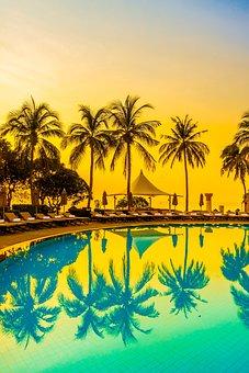 Palm Trees, Beach, Summer, Tropical, Swimming Pool