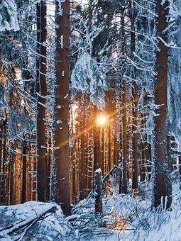 Winter, Forest, Sunset, Sun, Sunlight, Trees, Frost