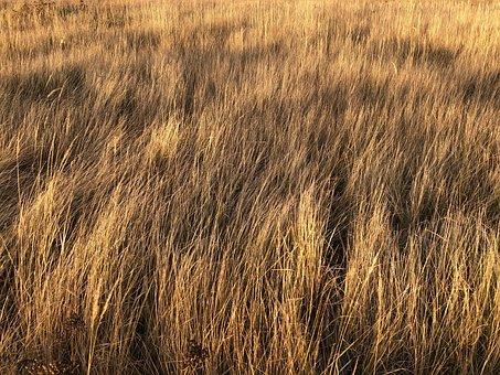 Grass, Shadow, Autumn, Field, Nature, Brown, Gold, Walk