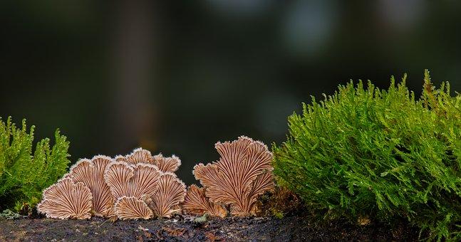 Mushroom, Winter Mushroom, Mushrooms, Wood Fungus
