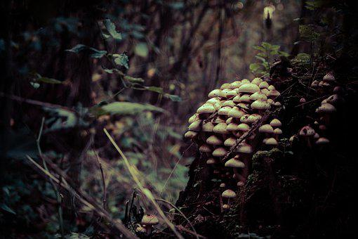 Forest, Nature, Mushroom, Cone, Pine, Green, Plant