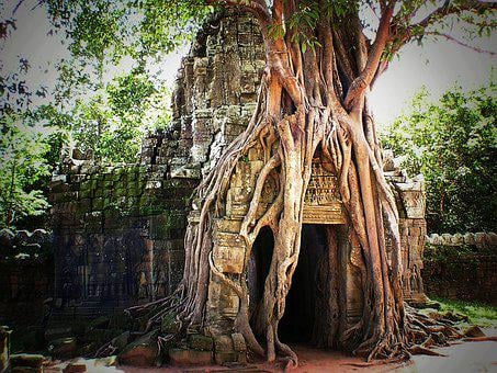 Cambodia, Angkor, Asia, Siem Reap, Temple, Jungle