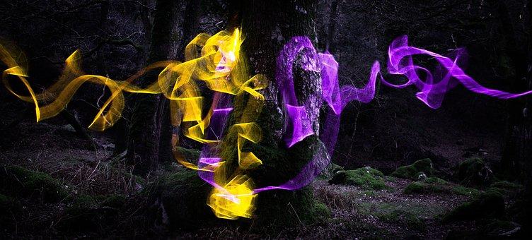 Tree, Light, Slow, Forest, Landscape, Nature, Night