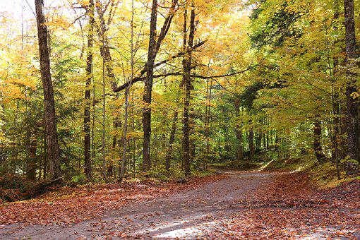 Forest, Autumn, Trees, Leaves, Landscape, Fall, Natural