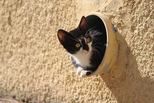 Cat, 3sixty, Kitten, Cat In Tube, Greece, Chios, Pets